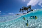Hukum Air dan Bangkai Hewan Laut