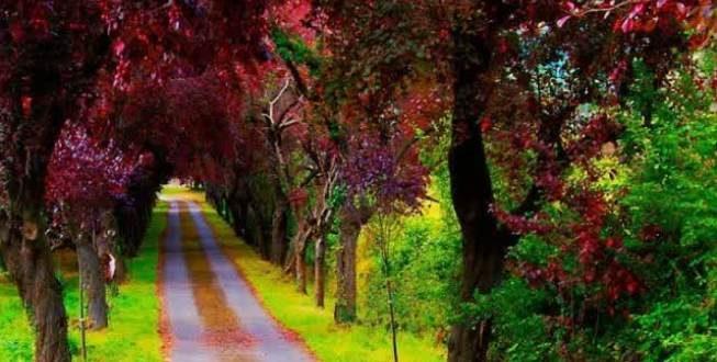 Gambar Pemandangan Alam Yang Indah Dan Mudah Digambar